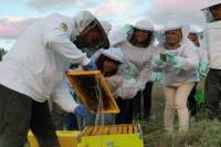 Become a Beekeeper for a Day in Nafplio