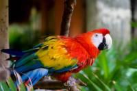 Belize City Shore Excursion: Belize Zoo and City Tour