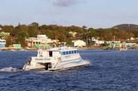 Bioluminescent Bay Catamaran Cruise with Dinner