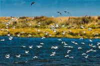 Birdwatching in the Tagus River Estuary