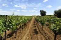 Blaye and Bourg Tour with Wine-Tasting Garonne River Cruise from Bordeaux