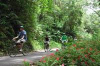 Blue Mountain Bicycle Tour from Falmouth