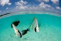 Bora Bora Introductory Scuba Dive