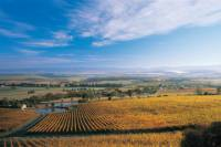 Boutique Yarra Valley Winery Day Trip from Melbourne
