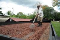 Cacao Plantation and Chocolate Factory Tour from Santo Domingo