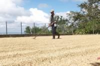 Café Las Flores Coffee Plantation Tour from Managua