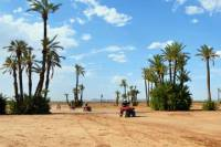 Camel and Quad Biking Tour from Marrakech