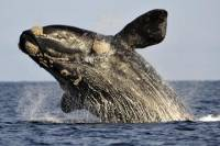 Cape Riviera and Whales Watching Tour from Cape Town