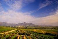 Cape Winelands Tour Including Franschhoek from Cape Town