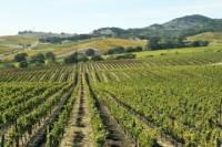 Casablanca Valley Private Wine Wine Tour: Casas del Bosque and Emiliana Wineries