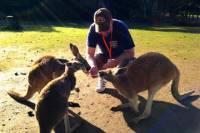 Caversham Wildlife Park, Swan Valley Wine Tasting, The Pinnacles and Sandboarding Day-Trip from Perth