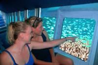 Cayman Islands Submarine Tour plus Turtle Encounter