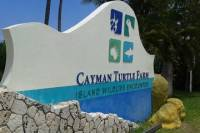 Cayman Turtle Farm and Stingray City Fun Day