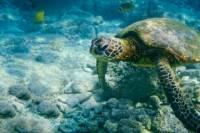 Cayman West Bay Sightseeing Tour