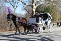 Central Park Horse and Carriage Ride with Professional Photographer