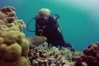 Certified Diving Tour: Waikiki South Shore Shallow Boat Dive
