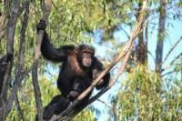 Chimpanzee Eden and Botanical Gardens Tour from Hazyview