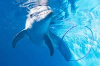 Clearwater Marine Aquarium General Admission