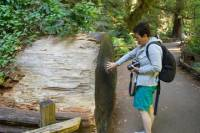 Coastal Redwoods Tour with 1-Hour Golden Gate Bay Cruise from San Francisco