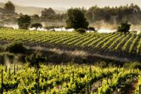 Colchagua Valley Wine Tour from Santiago