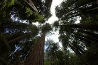 Combo Tour: Muir Woods and Wine Country