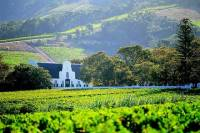 Constantia Wine Tour from Cape Town