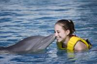 Cozumel Dolphin Trainer for a Day Program