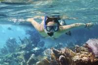 Cozumel Snorkeling Tour: Palancar, Columbia and Cielo Reefs