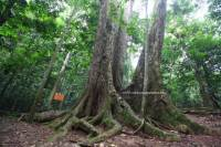 Cuc Phuong National Park Day Tour from Hanoi