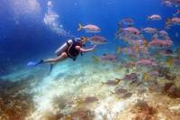 Diving in the Mexican Caribbean for Beginners / 2 Tanks 2 Dives / All Inclusive