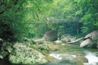 Daintree and Cape Tribulation 4WD Tour from Cairns