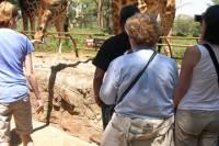 Day Tour from Nairobi: David Sheldrick Elephant Orphanage and Giraffe Center