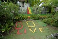 Day Trip to Bob Marley's Nine Mile and Dunn's River Falls from Falmouth