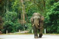 Day Trip to Khao Yai National Park including Elephant Ride