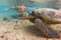 Discover Hidden West Oahu With Snorkeling