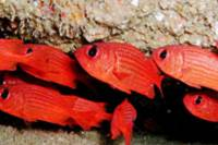 Discover Scuba Diving Around Los Cabos