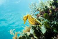 Discover Scuba Diving in Pula