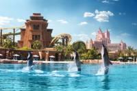 Dolphin Experience at Atlantis The Palm in Dubai
