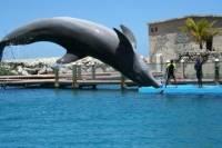 Dolphin, Shark and Stingray Encounter Combo in Puerto Plata