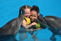 Dolphin Swimming in Sharm el Sheikh