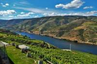 Douro Valley Guided Private Tour from Porto