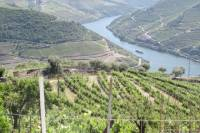 Douro Valley Tour with Lunch and visit to two Vineyards