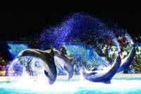 Dubai Dolphinarium Dolphin and Seal Show with Optional Aladdin Acrobatic Show