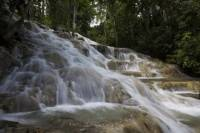 Dunn's River Falls and Fern Gully Highlight Adventure Tour from Montego Bay