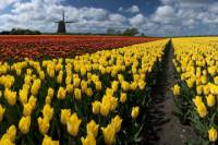 Dutch Windmills and Countryside Day Trip from Amsterdam Including Cheese Tasting in Edam