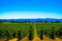 El Dorado Wine Country Tour from South Lake Tahoe