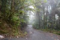 El Yunque Rainforest Guided Hiking and Waterfall Tour
