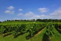 En Route of Venetian Wine 7 Day Tour