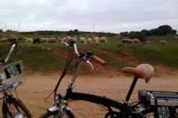 Environmental Park Bike Tour from Vilamoura