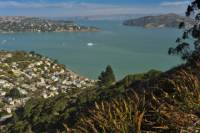 Explore Marin County: Sausalito, Muir Woods and Seaplane Tour